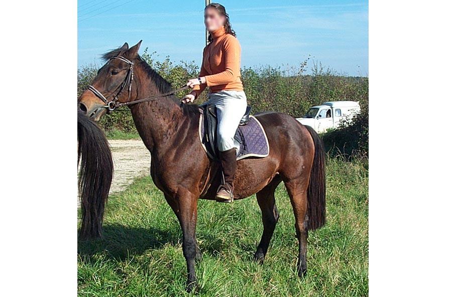 domaine-du-plessis-equitation-2